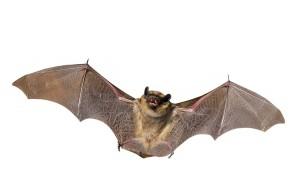 bigstock-Bat-7754331