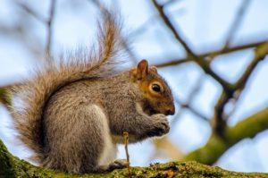 squirrel-1389376624T24