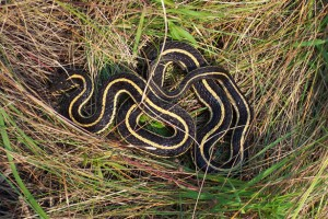 snake-in-the-grass-23441280235125wUx3
