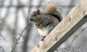 Squirrel Scout